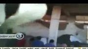جنایت داعش/ قتل ۷ سوری در دیرالزور