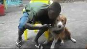 ببین سگه چجور صورت صاحبشو گاز گرفت...!