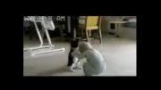 کشتی گرفتن کودک با گربه