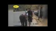 صحنه های جالب از رفتار حیوانات با انسان