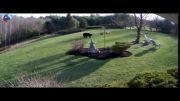 رویارویی خرس سیاه و سگ ها در حیاط خانه