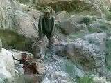 کشتن وحشیانه خرس مادر و توله هایش به دست شکارچیان سنگدل