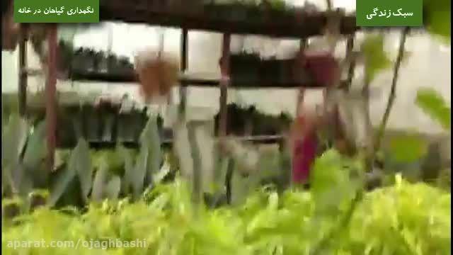 روش نگهداری گیاهان در خانه