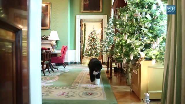 سگ اوباما در کاخ سفید