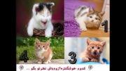 کدومو دوستش داری؟