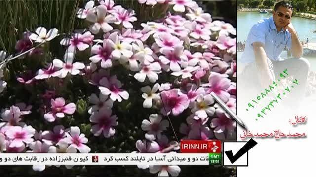شناسایی 475 گونه گیاهی نادر در سبلان - اردبیل