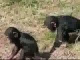 محبت میمون مادر به بچه اش