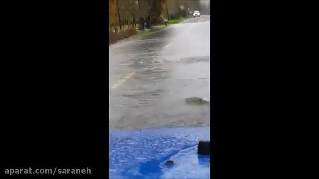 ماهی هایی که سعی می کنند از خیابان عبور کنند