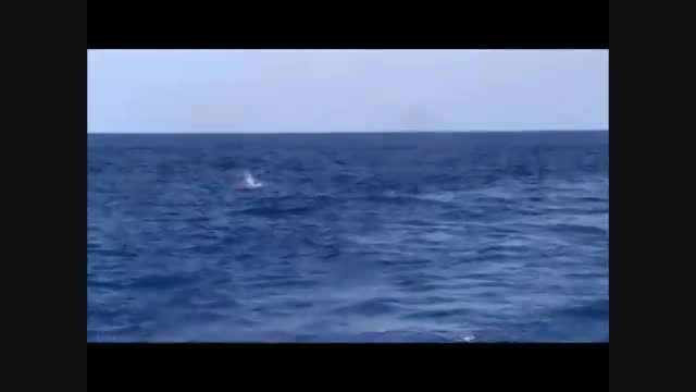 پریدن ماهی به داخل قایق و بسیار جالب و دیدنی