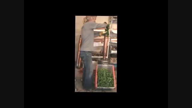 تولید اسانس گیاهان دارویی