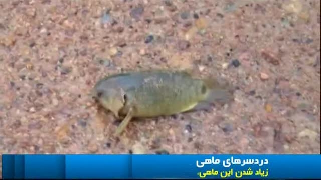 ماهی که راه میره حرف میزنه اعتراض میکنه و یارانه میگیره