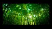 آهنگ سیامک عباسی به نام شبی خوش-HOT+لینک دانلود MP3