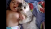 علاقه عجیب گربه به بچه :)