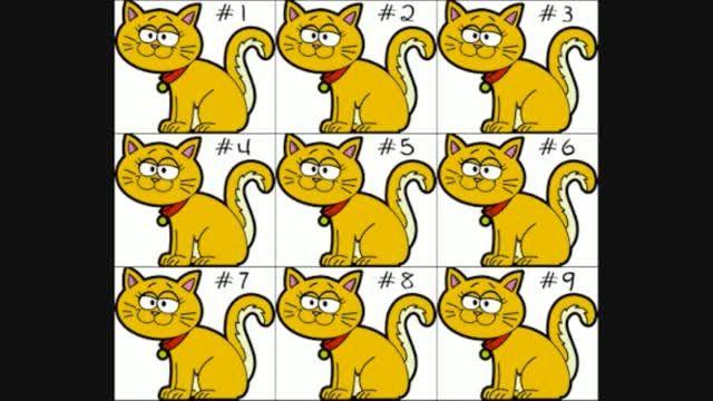 آیا می توانید دو گربه متشابه را پیدا کنید؟