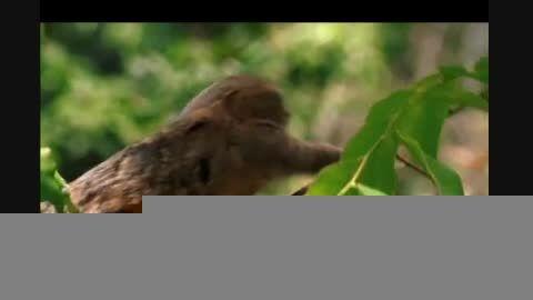 کوچکترین میمون جهان