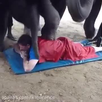 ماساژ دادن کمر توسط فیل!