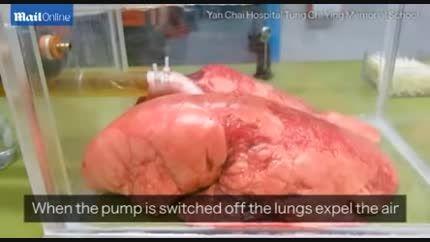 تاثیر مستقیم سیگار کشیدن بر روی شش ها - 60 سیگار