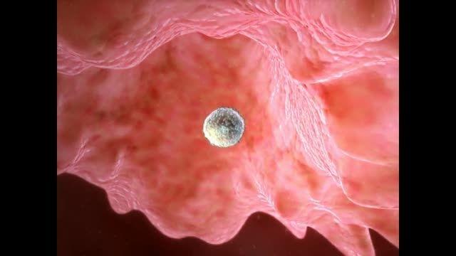 پیشگیری از بارداری به روش طبیعی