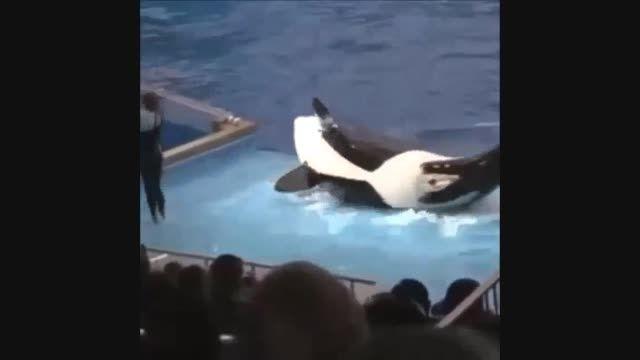 عاقبت بازی کردن با نهنگ قاتل!! (خنده داااار)