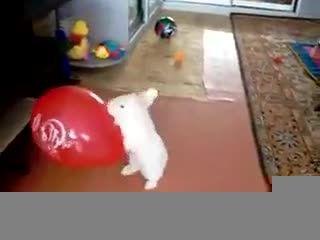 خرگوش بامزه از ترس نمیتونه فرار کنه بیچاره