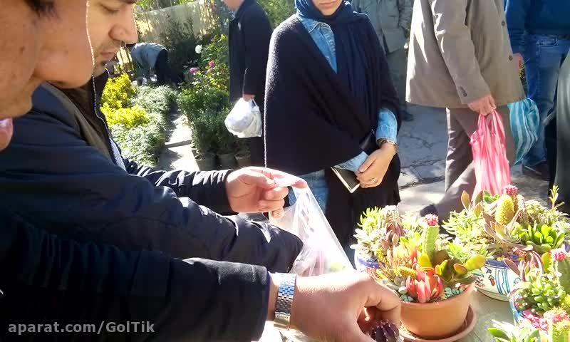 آموزش جابه جایی گلدان کاکتوس ژمینو