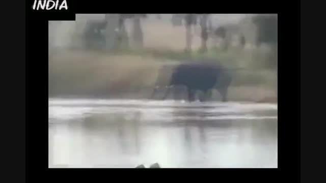 حمله فیل قاتل و خشمگین به ملت و له کردن جوان هندی