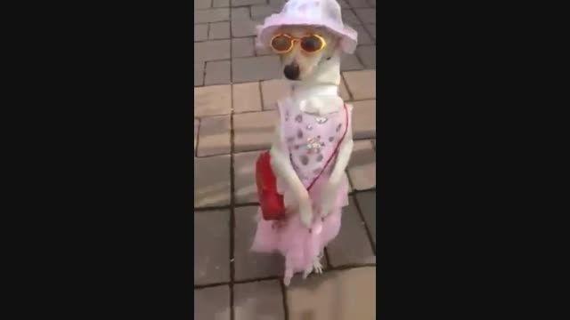سگی که لباس قنشگی پوشیده همراه با آهنگ