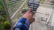 دست زدن به طوطی در باغ پرندگان تهران