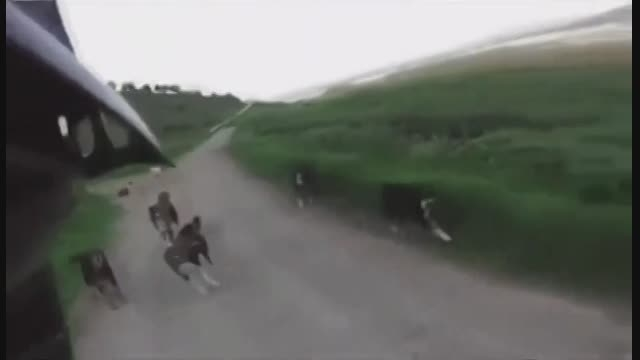 حمله یه گله سگ ولگرد به انسان!!!(زیر 15سال نگاه نکنن)