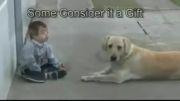 عشق ورزی سگ