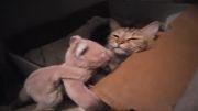 مامان گربه بچه هاش رو بغل میكنه!