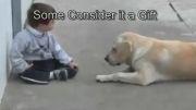 سگ مادر دلسوز کودک بیمار (قدرت خدا)