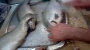 پاک کردن و تمیز کردن ماهی بصورت کامل(1)