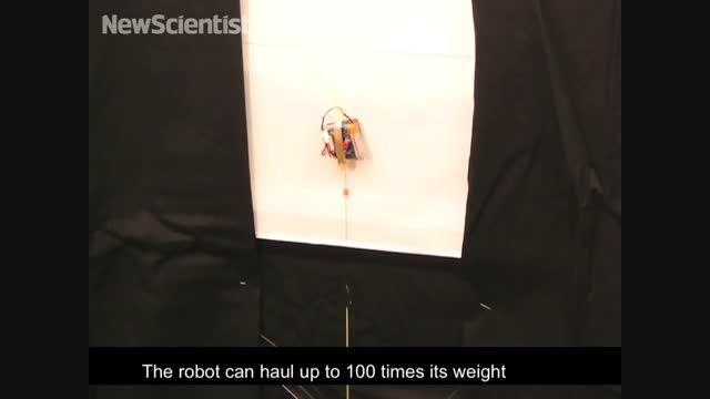 ربات هایی برگرفته از مارمولک