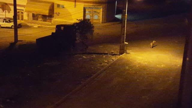 پارس کردن سگ ولگرد در شب