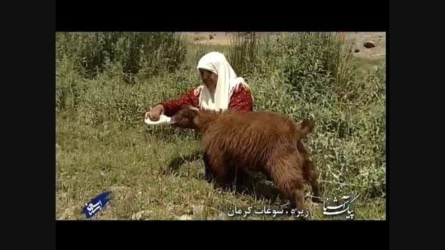 زیره سوغات کرمان