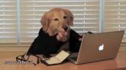 سگ کارمند