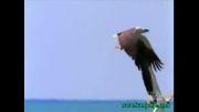 خطرناک ترین ها - جنگ عقاب ها در آسمان