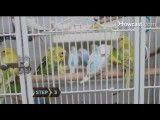 انتخاب قفس مناسب برای طوطی
