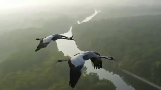 پرواز با پرندگان مهاجر :: wmobile.ir