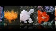 10 موجودات دریایی که شما فک نمی کنید وجود دارند