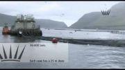 پرورش و فرآوری ماهی سالمون در جزایر فارو (قسمت سوم)