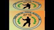 لوگوی وبلاگم ( ببر تانگ سودو )