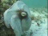 مخفی شدن موجود دریایی به طور باورنکردنی