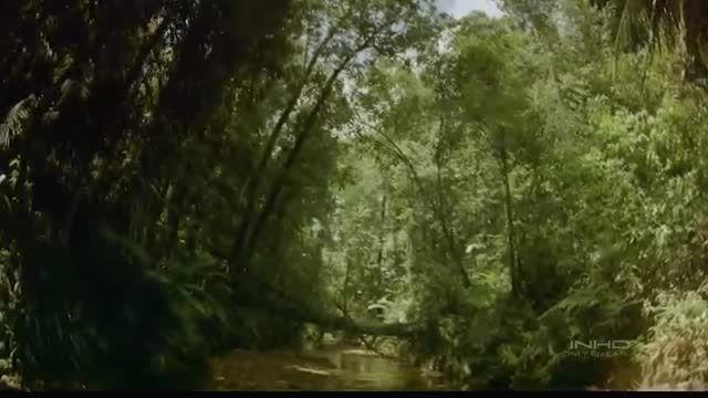جنگل های استوایی