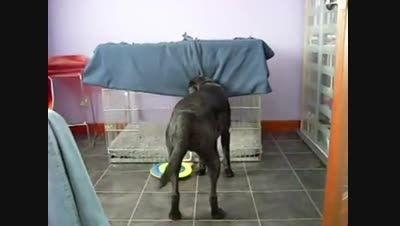 سگ خیلی باهوش