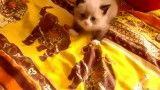 ترسیدن بچه گربه از صدای جارو برقی