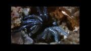 نبرد هزارپا با عنکبوت