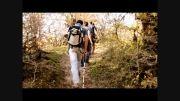 تور جنگل الیمستان