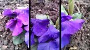 کیفیت فیلمبرداری optimus G-htc one- xperia z